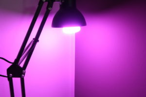 Philips Hue White and Color Ambiance Lila Pink
